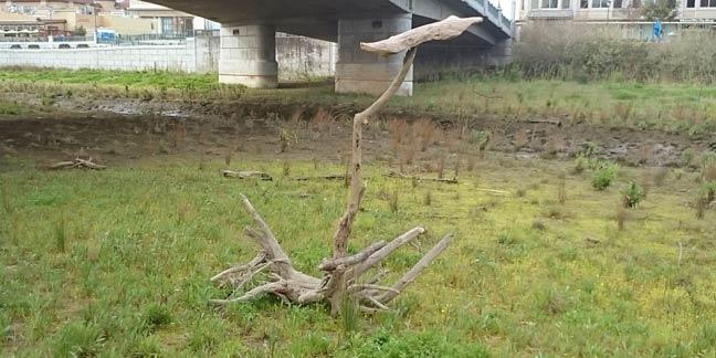 stump under freeway overpass
